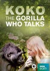 Koko: The Gorilla Who Talks to People