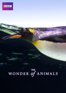 Wonder of Animals, The - Season 1