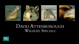 Is David Attenborough: Wildlife Specials, Season 1 on Netflix?