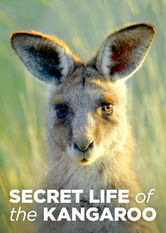Secret Life of the Kangaroo Netflix ZA (South Africa)